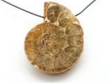 Ammonite Pendant 30mm (AM528)