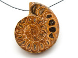 Ammonite Pendant 36mm (AM530)