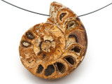 Ammonite Pendant 43mm (AM531)