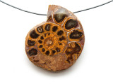 Ammonite Pendant 36mm (AM532)