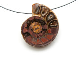Ammonite Pendant 34mm (AM533)