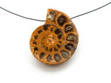 Ammonite Pendant 30mm (AM534)