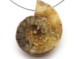 Ammonite Pendant 46mm (AM538)