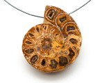 Ammonite Pendant 40mm (AM539)