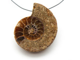 Ammonite Pendant 39mm (AM540)