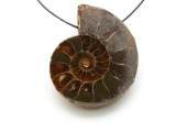 Ammonite Pendant 31mm (AM543)