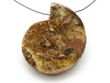 Ammonite Pendant 43mm (AM544)