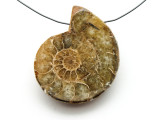Ammonite Pendant 40mm (AM545)