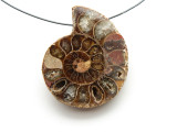 Ammonite Pendant 40mm (AM546)