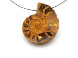 Ammonite Pendant 35mm (AM547)