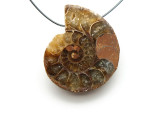 Ammonite Pendant 30mm (AM548)
