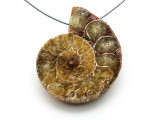 Ammonite Pendant 39mm (AM550)