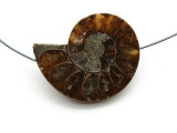 Ammonite Pendant 31mm (AM551)