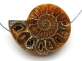 Ammonite Pendant 40mm (AM556)