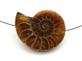 Ammonite Pendant 32mm (AM558)