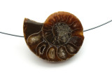 Ammonite Pendant 28mm (AM559)