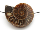 Ammonite Pendant 45mm (AM561)