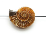 Ammonite Pendant 34mm (AM566)