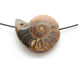 Ammonite Pendant 34mm (AM568)