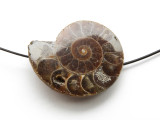 Ammonite Pendant 37mm (AM570)