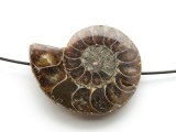 Ammonite Pendant 37mm (AM571)