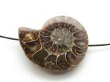 Ammonite Pendant 37mm (AM571)