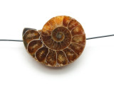 Ammonite Pendant 33mm (AM572)