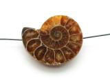 Ammonite Pendant 33mm (AM572)