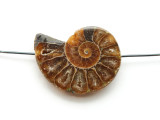 Ammonite Pendant 32mm (AM574)