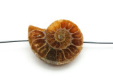 Ammonite Pendant 29mm (AM575)