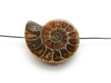 Ammonite Pendant 30mm (AM576)
