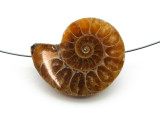 Ammonite Pendant 33mm (AM578)