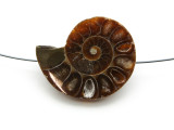 Ammonite Pendant 33mm (AM579)