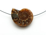 Ammonite Pendant 29mm (AM580)