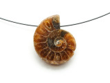 Ammonite Pendant 26mm (AM581)