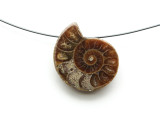Ammonite Pendant 26mm (AM582)