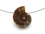 Ammonite Pendant 27mm (AM583)
