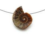 Ammonite Pendant 29mm (AM584)