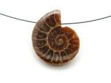 Ammonite Pendant 29mm (AM585)
