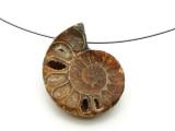 Ammonite Pendant 32mm (AM586)
