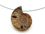 Ammonite Pendant 32mm (AM586)