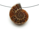 Ammonite Pendant 29mm (AM588)
