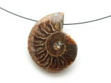 Ammonite Pendant 30mm (AM589)