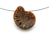 Ammonite Pendant 28mm (AM590)