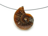 Ammonite Pendant 26mm (AM591)