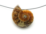 Ammonite Pendant 26mm (AM593)