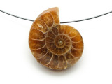 Ammonite Pendant 28mm (AM596)
