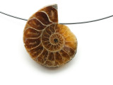 Ammonite Pendant 28mm (AM597)