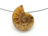 Ammonite Pendant 26mm (AM599)