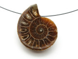 Ammonite Pendant 31mm (AM600)
